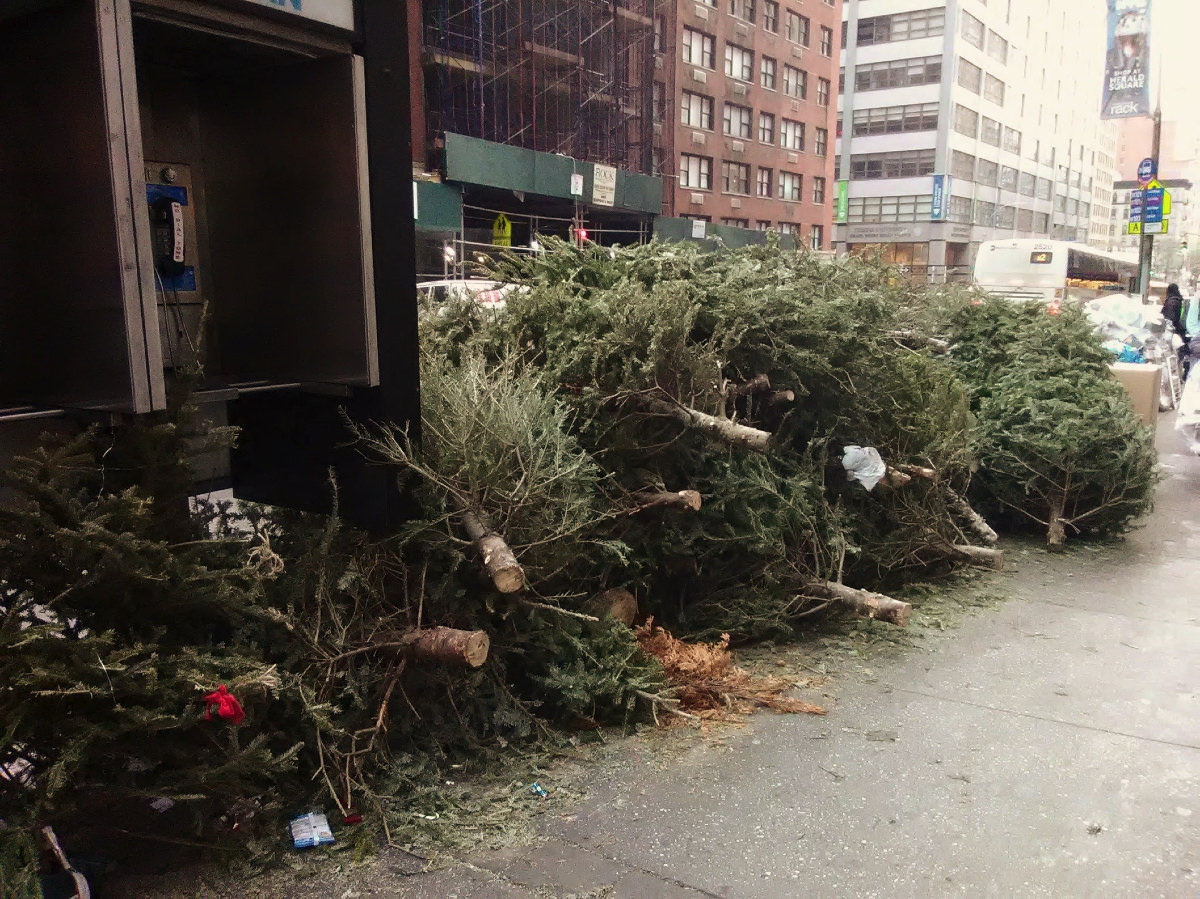 Piles of discared Christmas trees on a pavement in New York.